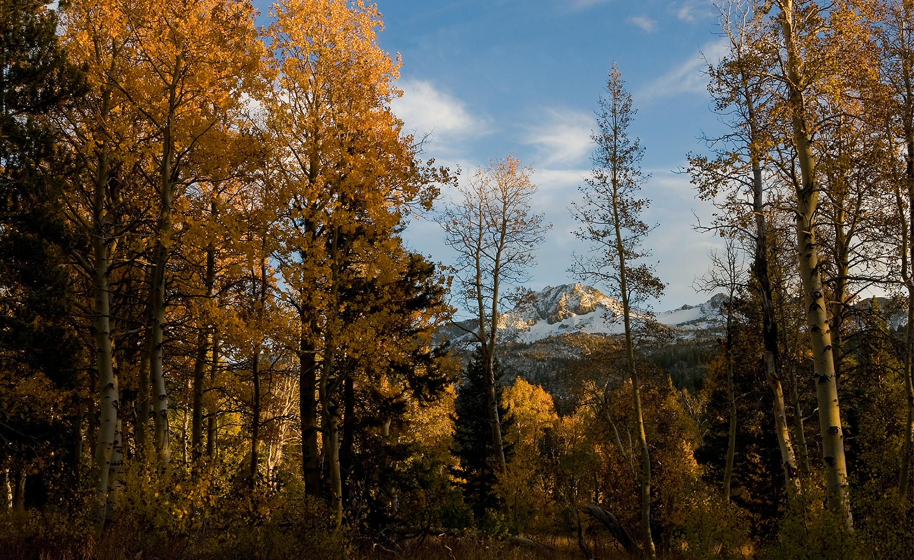 08_South_Lake_Tahoe_Roundtop_Fall_Colors_Backcountry_California_Environment_Landscape_Chris_Wellhausen_Photography.JPG