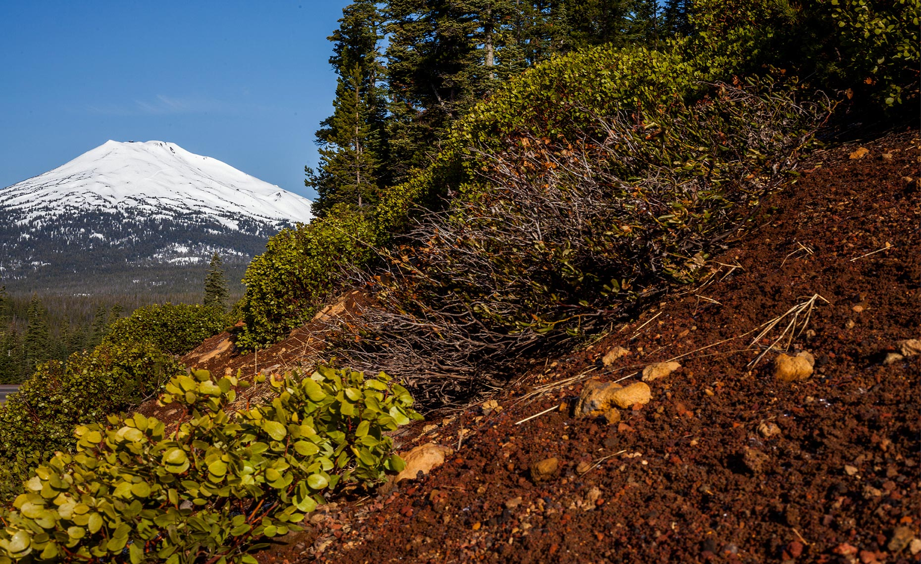 29_Mt_Bachelor_Environment_Landscape_Chris_Wellhausen_Photography.JPG