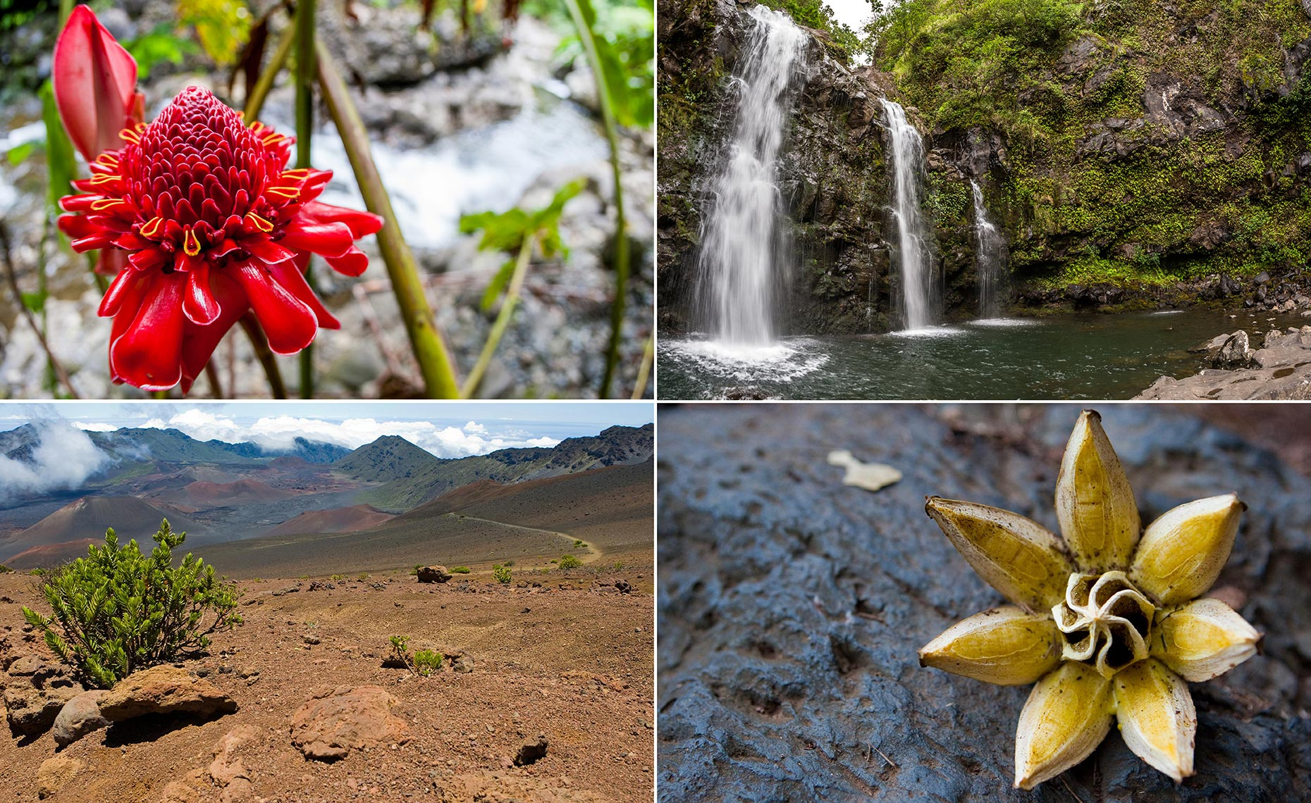 43_Hana_Volcano_Haleakala_National_Park_Maui_Hawaii_Environment_Landscape_Chris_Wellhausen_Photography.JPG